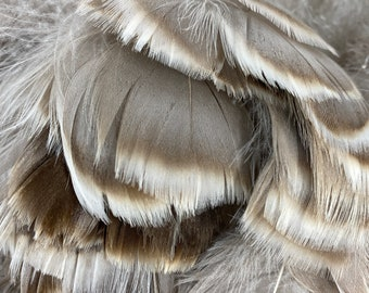 """Goose Coquille Natural Grey Feathers 4-5"""" Strung Goose Feathers Bulk 0.25LB (approx 1.5yds), Goose Plumage Feathers ZUCKER® USA"""