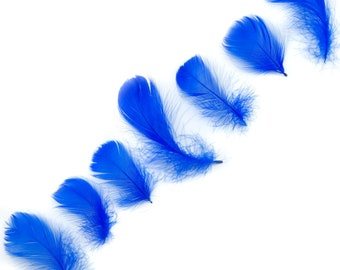 """Goose Coquille Feathers, 3-5"""" Royal Blue Loose Goose Feathers, Small Feathers, Arts and Craft Supplies ZUCKER®"""