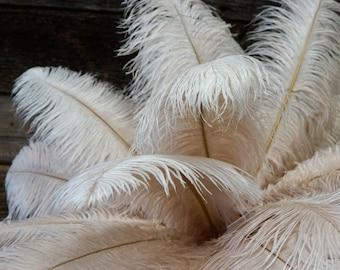 "Ostrich Feathers 17-20"" BEIGE, 1 to 25 pcs, Ostrich Plumes, Carnival Samba, Ostrich Drab, Mardi Gras, Centerpieces, Feather Fan ZUCKER® USA"