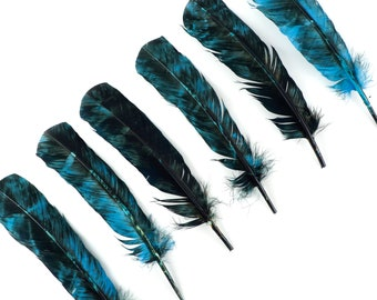 LEFT SIDE 25pc/pkg Ocean Blue & Black Tie-Dyed Turkey Quill Value Pack - For Arts and Crafts, Millinery, Carnival and Costume Design ZUCKER®