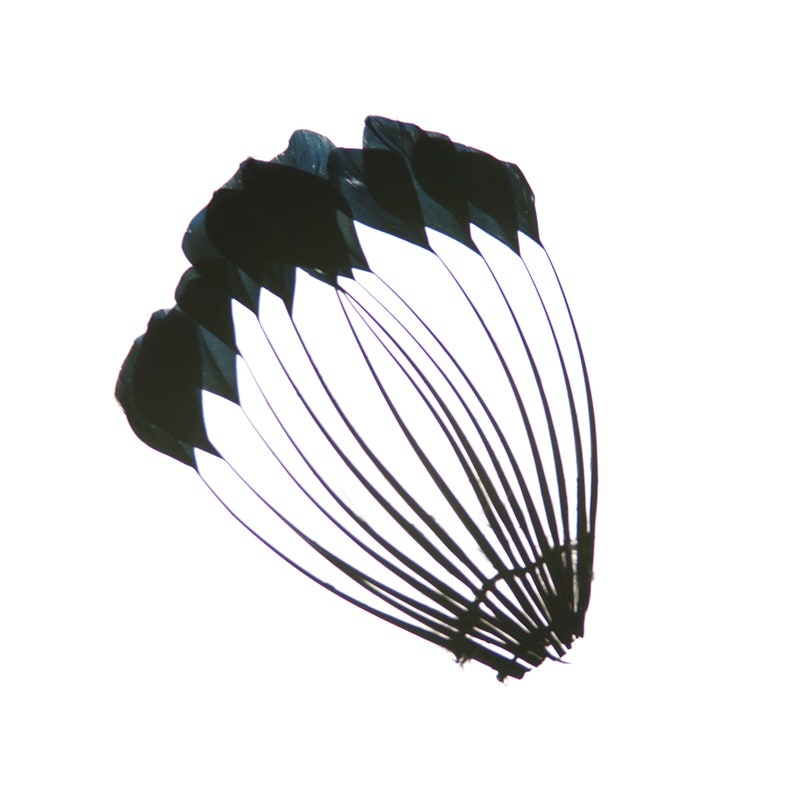 Black Dyed Stripped Duck Center Fan Arts and Crafts Supplies ZUCKER\u00ae Stripped Duck Cochette Center Fan for Jewelry Design Feather Pads