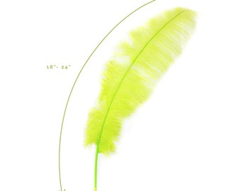 """Ostrich Feathers, Lime Green Ostrich Feather Spads 18-24"""", Centerpiece Floral Supplies, Carnival & Costume Feathers ZUCKER®"""