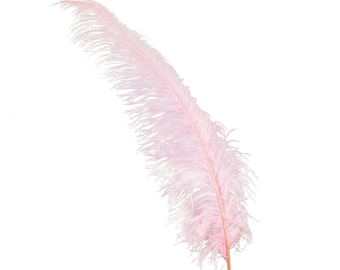 """Ostrich Feathers, Candy Pink Ostrich Feather Spads 18-24"""", Centerpiece Floral Supplies, Carnival & Costume Feathers ZUCKER®"""