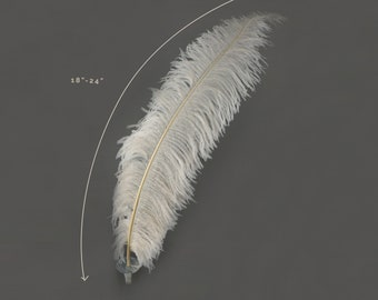 """Ostrich Feathers, Ivory Ostrich Feather Spads 18-24"""", Centerpiece Floral Supplies, Carnival & Costume Feathers ZUCKER®"""
