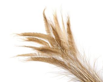 """Bleach Dyed Peacock Sword Feathers 10 to 100 Pieces 15-25"""" GOLDEN Iridescent Beige - Floral Decor, Millinery, Jewelry Design ZUCKER® USA"""