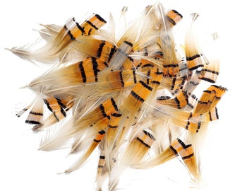 Pheasant Feathers, Natural Golden Pheasant Crest Plumage, Loose Short Natural Feathers for DIY Jewelry, Craft and Fly Tying  ZUCKER®