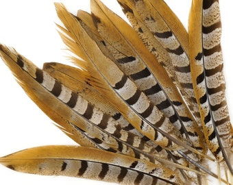 """Venery Pheasant Tail Feathers 8-12"""", 12 pcs Natural Brown Stripe Pheasant Feathers For Floral Supplies, Fashion, Hat Feathers ZUCKER®"""