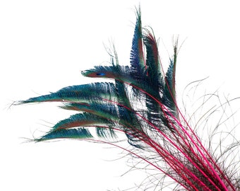 """Peacock Sword Stem Dyed Feathers, 10 to 100 pieces 15-25"""" - Hot PINK, Floral Decor, Millinery, Jewelry Design ZUCKER® Sanitized in USA"""
