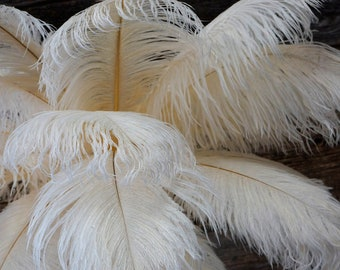 """Ostrich Feathers 17-20"""" IVORY, 1 to 25 pcs, Ostrich Plumes, Carnival Samba, Ostrich Drab, Mardi Gras, Centerpieces, Feather Fan, ZUCKER® USA"""