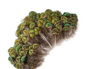 Peacock Feathers, Natural Green Gold Peacock Plumage, Loose Peacock Plumage Feathers, Small Golden Eye Peacock Plumage for Crafts ZUCKER®