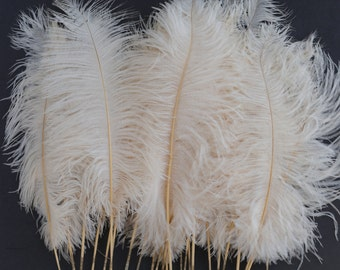 """Ivory Ostrich Feather Tips, 16-18"""" Ostrich Tails 30 Pieces for Millinery & Floral Design, DIY Costume, Carnival, Mardi Gras ZUCKER®"""