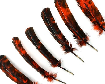 RIGHT SIDE 25pc/pkg Orange & Black Tie-Dyed Turkey Quill Value Pack - For Arts and Crafts, Millinery, Carnival and Costume Design ZUCKER®