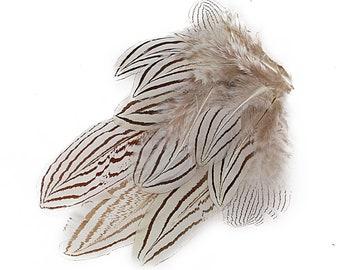 "Natural Black & White Silver Pheasant Plumage, Unique Feathers, 1 DOZEN 2-4"", Dyed Silver Pheasant Barred Plumage ZUCKER®"