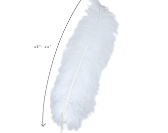 """Ostrich Feathers, White Ostrich Feather Spads 18-24"""", Centerpiece Floral Supplies, Carnival & Costume Feathers ZUCKER®"""