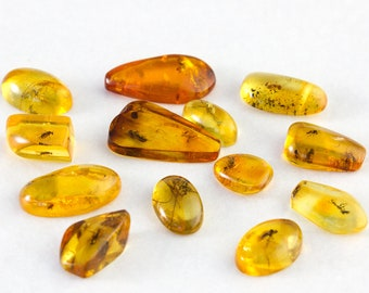 Amber with Fossil Insect, Multiple Insects in Amber, Genuine Baltic Amber Collector's Specimen, Natural Baltic Amber with Fossil Inclusions