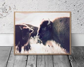 Bison Print - American Buffalo Print, Digital Download, Buffalo Wall Art, Southwestern Decor, Modern Bohemian Print, Tribal Print, Wild West