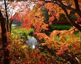 Fall Trees around Lake