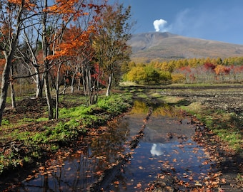 Fall Trees with Mt. Asama