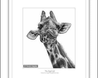 350 New Giraffe wall art print signed Limited edition wildlife pencil drawing