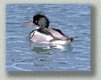 Red-breasted Merganser, Mergus serrator, duck, bird, birding, bird art, print