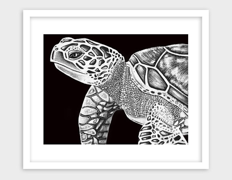 graphic about Turtle Printable called Turtle Printable, Black And White Turtle, Maritime Animal Artwork, Turtle Decor, Sea Everyday living Artwork, Sea Turtle Artwork, Maritime Lifestyle Artwork, Turtle Dwelling Decor