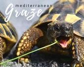 8oz Mediterranean Graze  Tortoise food supplement
