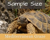 Mediterranean Tortoise Graze Sample Size  *FREE SHIPPING SALE*