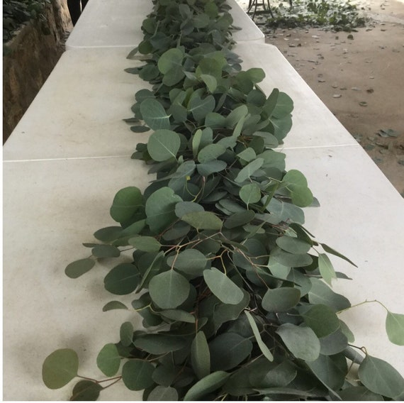 FRESH Silver Dollar Eucalyptus Garland WHOLESALE Arch Table