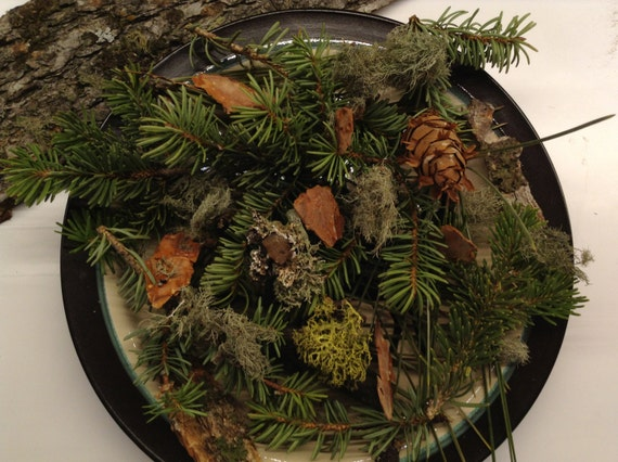 Fresh Pine Tree Potpourri