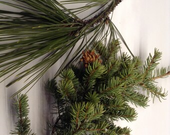 Fresh Pine Tree Branches