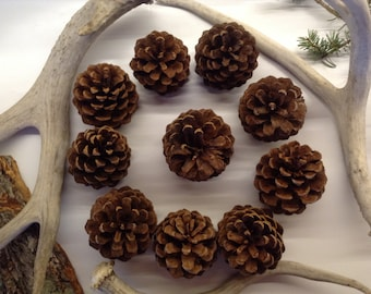 Pine Cones, Natural or with Silver Glitter~10 pcs