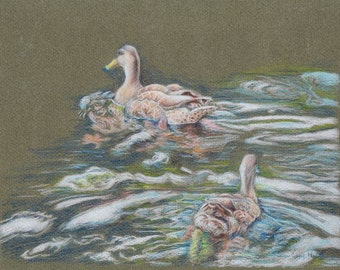 Ducks swimming print, ducks on pond, giclee print, colored pencil art