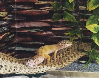 SWING STYLE reptile hammock