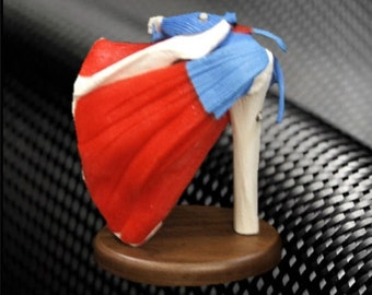 Shoulder Anatomy Model w/ Subscapular Muscles on Wood Base (Model #SH200RC) - American Anatomical