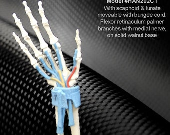 Anatomy Carpal Tunnel Hand Model on a Decorative Wood Display Base (Model #HAN202CT) - schools, medical, students - American Anatomical