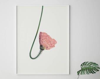 Pink Flower Wall Art, Flower Print, Scandinavian Wall Art, Minimalist Wall Art, Digital Printables, Scandinavian, Modern Minimalist, Floral