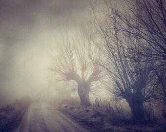 Misty Forest,Foggy Forest Print,Scandinavian Print,Misty Morning,Nature Photograph,Trees Art,Foggy Landscape,Fog Wall Art,Scandinavian Decor