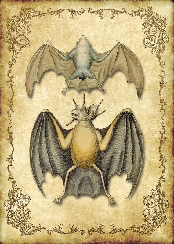 ANTIQUE ANATOMY BAT Print Witch Wiccan Bruja Animal Oddities ...
