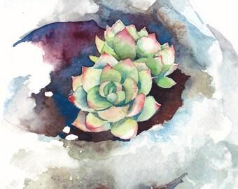 Succulent print, Succulent watercolor, Succulent art, Botanical print - giclee print of an original watercolor (5 x 7 in)