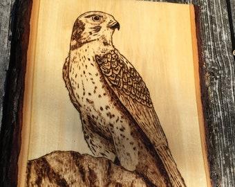 Hawk Woodburning