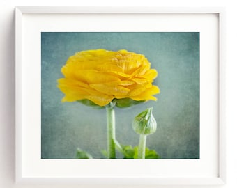 Styled Stock Photography.Yellow Ranunculus Flower. Set of 4 instant, printable downloads. Personal or commercial use. For prints or web.