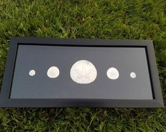 Sand dollar shadow box