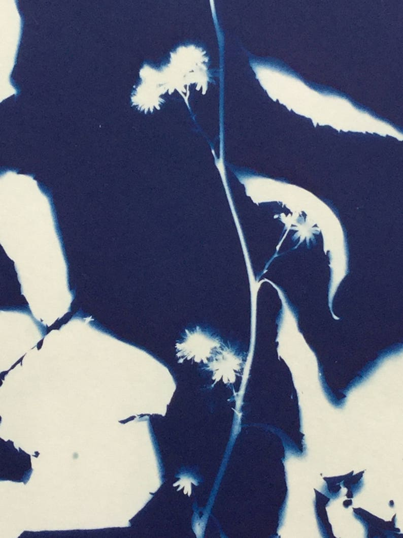 White Wood Aster Cyanotype Blue Print Graphic Art