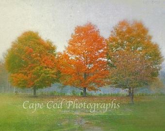 Autumn Decor, Colorful Trees, New England Foliage,  Fall New England, Orange Leaves, Fall Landscape, Foliage Wall Art, Nostalgic Art