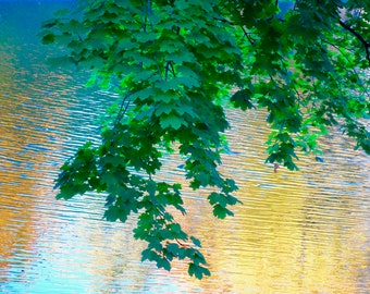 New England,Abstract Green, Water Reflection,  Fine Art Nature, Water, Lake, Green Leaves, Tree Branches, Summer Foliage, Abstract Nature
