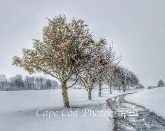 Winter Trees, Snowscape, Snowy Trees, Winter Landscape, Winter Wonderland, Housewarming gift, Wall Art , New England Art