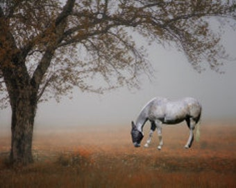 New England  White Horse under Tree in Mist  Photograph 8x12