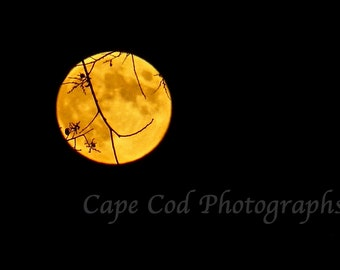 Orange Moon, Halloween ,New England, Full Moon, Halloween Moon, Moon Tree Branches, Witches Moon, Scary Moon, Autumn,Spooky