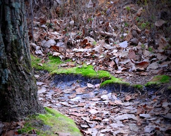 Moss Lined Path