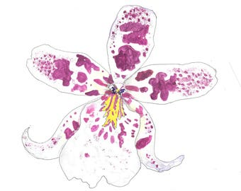Cattleya Orchid hand drawn watercolor illustration